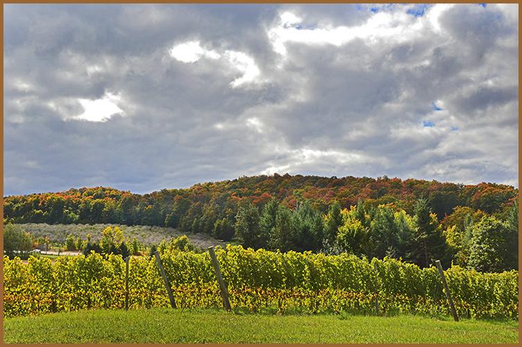 Vineyard10-13-16