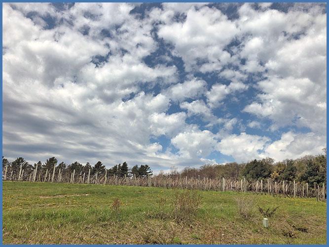 Vineyard5-16-19