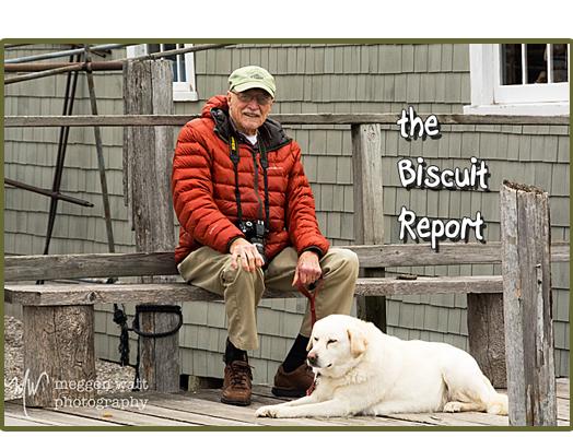 biscuit5-18-15